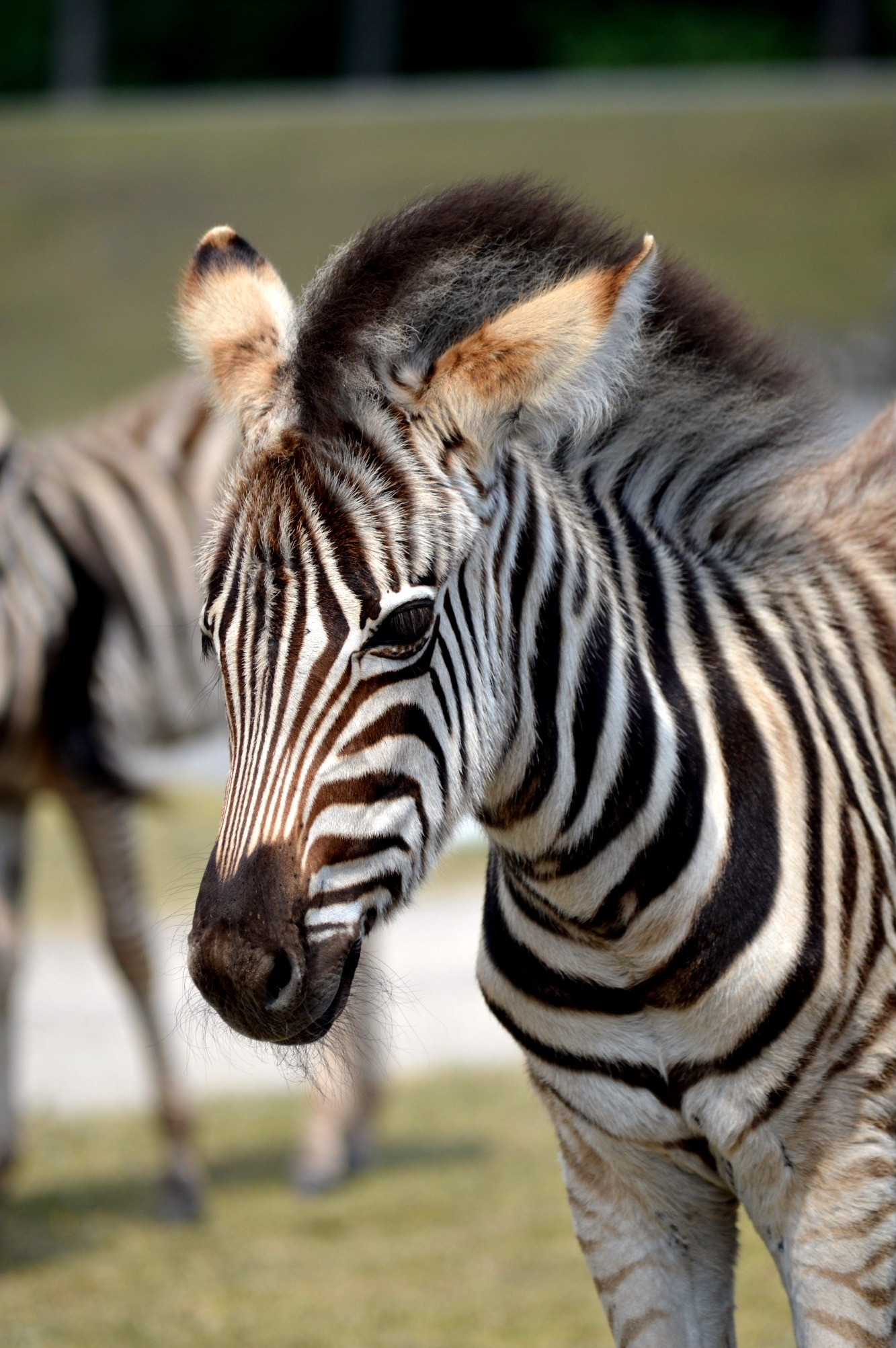 Safaripark Hodenhagen